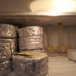 Samples stored in freezer